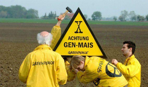 Activisten van Greenpeace in Seelow, Duitsland in 2005. Op dit veld werd de genmaïs van het type MON810 van Monsanto gezaaid.