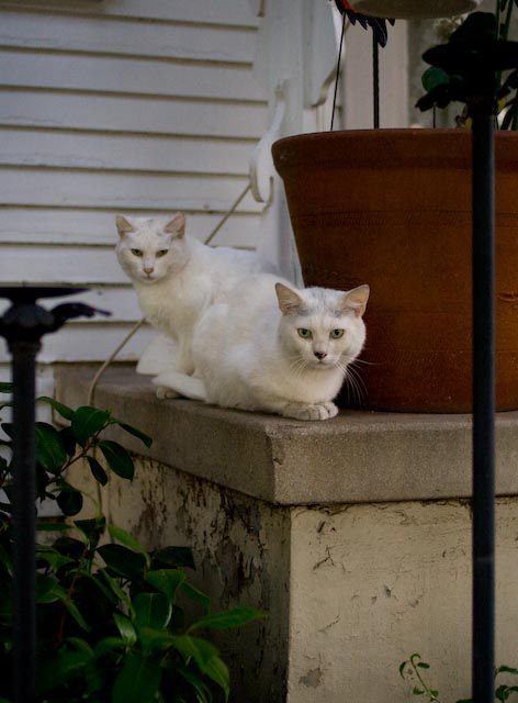 'On the Street... Twins, White Summer, Los Angeles'