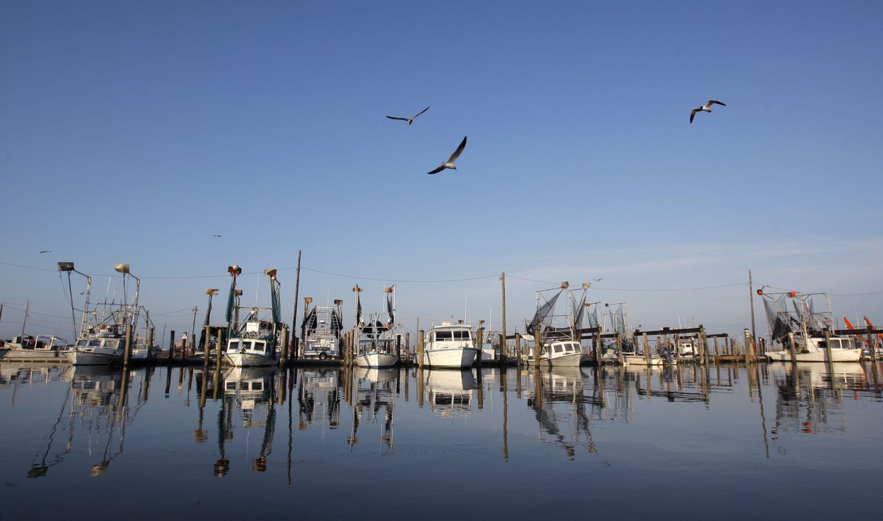 Vissers uit Louisiana zullen ook claims indienen bij BP. Foto Reuters Idle shrimp boats float at the docks of Joshua's Marina in Buras, Louisiana May 17, 2010. Local shrimpers who have not been hired by BP for oil spill clean-up efforts continue to fish the bay side of the coastal waters while restrictions are lifted. Energy giant BP said on Monday it was capturing about a fifth of the estimated oil gushing from its ruptured undersea Gulf of Mexico well and hoped to increase that amount before trying to fully stop the flow later in the week. REUTERS/Hans Deryk (UNITED STATES - Tags: ENVIRONMENT DISASTER ENERGY BUSINESS)