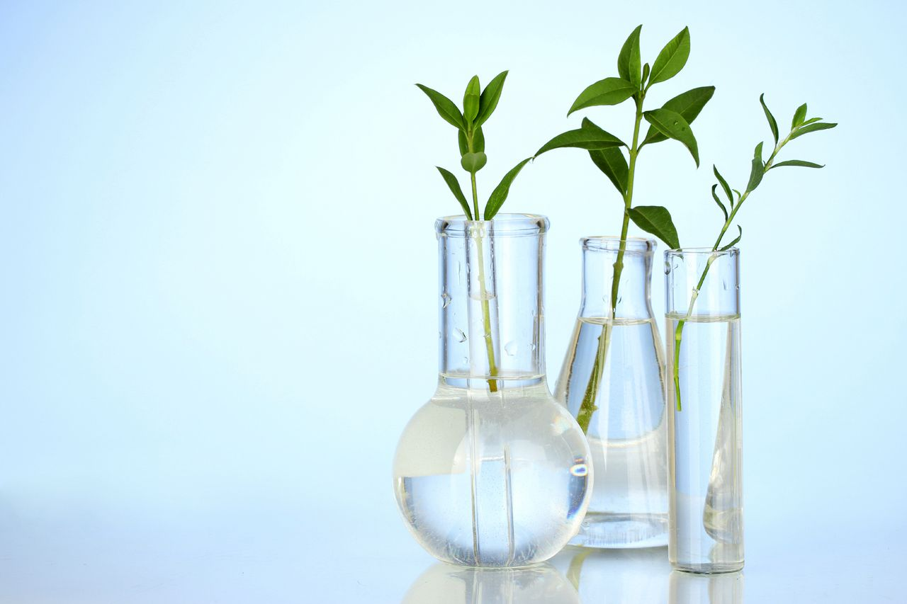 Test-tubes with a transparent solution and the plant on blue background close-up