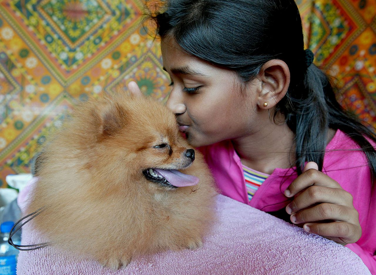 """Een lief bazinnetje Foto AFP An Indian child (R) kisses a three and a half year old Pomeranian dog named """"Peter"""" from Goa during an All Breed Championship Dog Show in Ahmedabad on June 8, 2008. """"Peter"""" owned by Steve Almeida bagged first prize in the Toy Group category of the event which was organised by The Ahmedabad Canine Club in which some 150 dogs from across Gujarat and other states participated. AFP PHOTO/Sam PANTHAKY"""