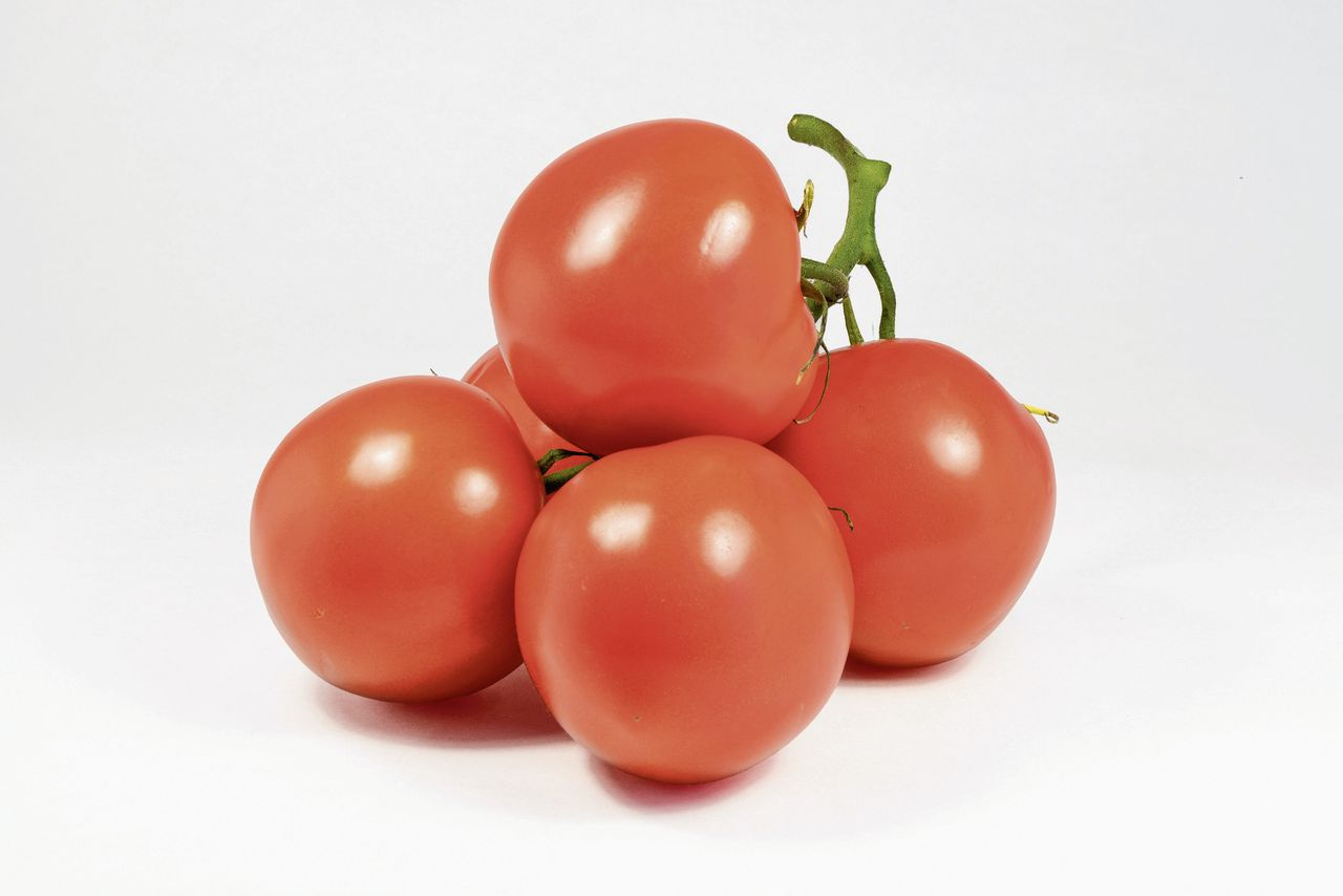 Organic natural tomatoes isolated on white background