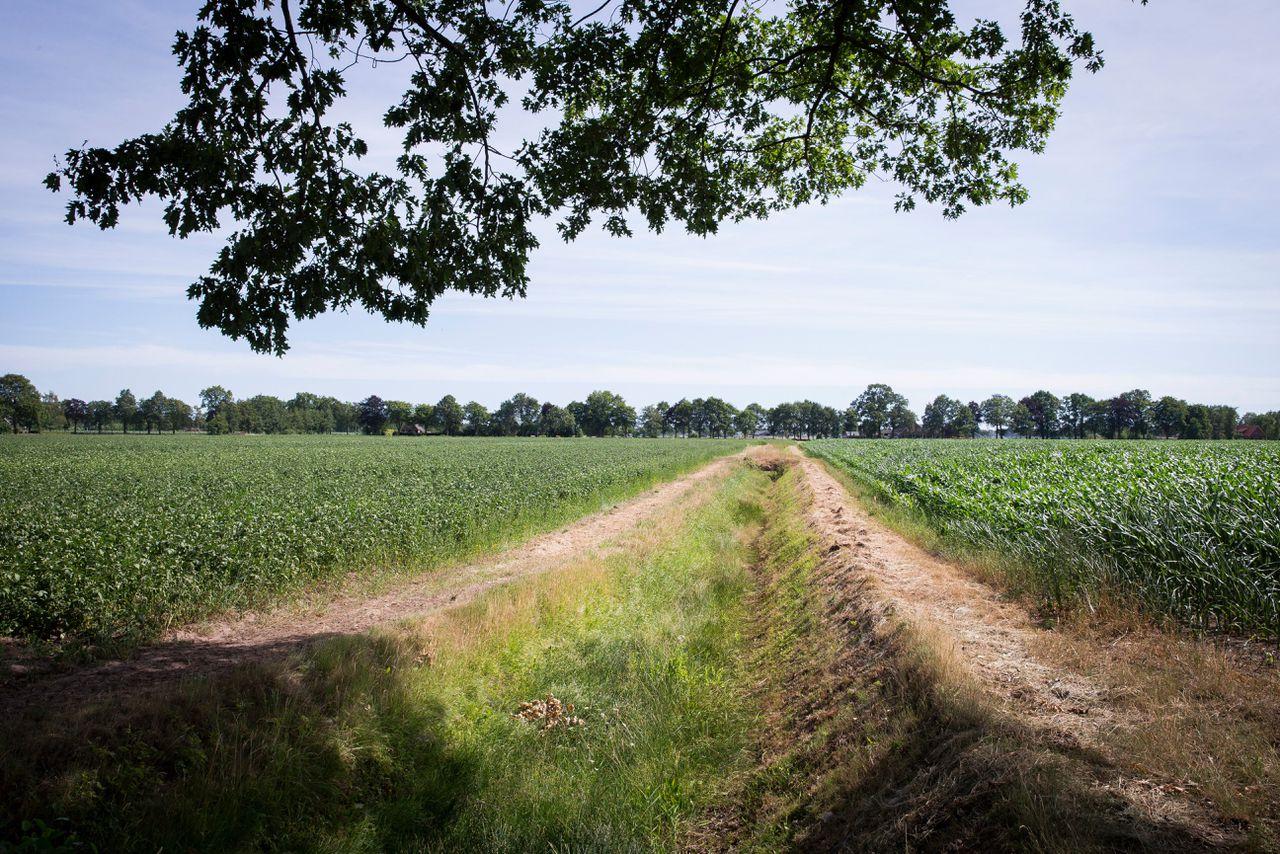 Een droge sloot tussen de akkers met aardappelen en maïs in het buitengebied van het Achterhoekse Halle.
