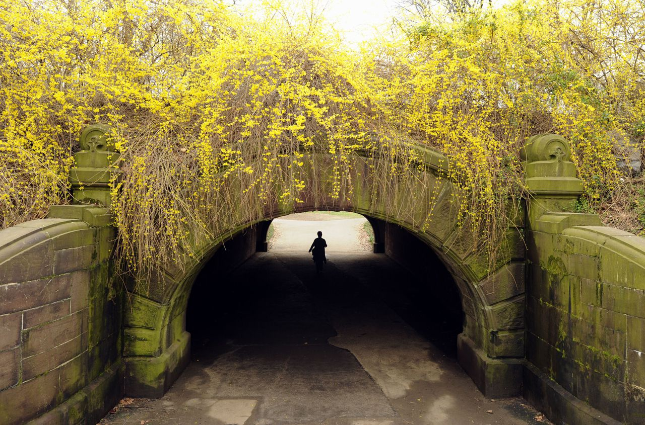 A jogger runs under a bridge in New York's Central Park on March 22, 2012 as flowers bloom. The unseasonably warm winter has brought spring blooms and record pollen counts three week early in 2012, according to experts AFP PHOTO / TIMOTHY A. CLARY
