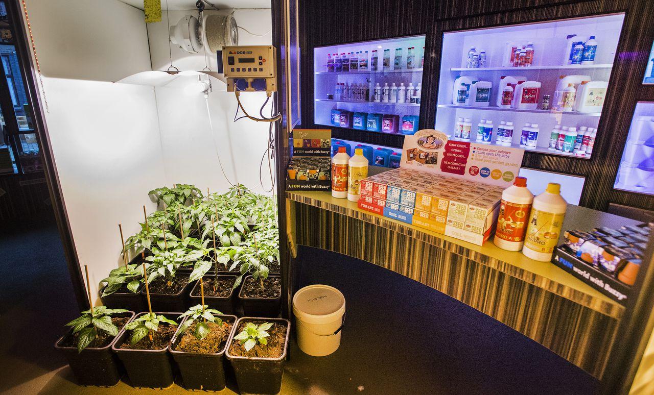 Interieur van een growshop.