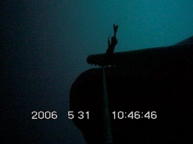 Van onderen gefilmd nabij Alaska: een potvis pakt een lijn met een gevangen zandvis en slingert eraan tot de vis loskomt. Foto's SIO/UC