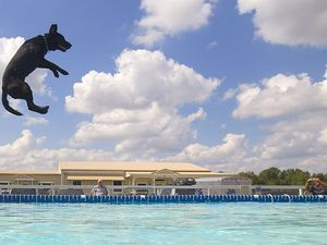 Hond Blaine vliegt door de lucht tijdens de Outdoor Big Air discipline van de DockDogs competitie in Houston.