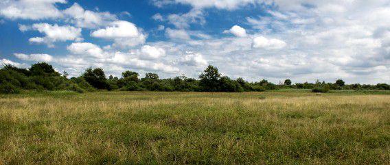 De graslanden in De Moerputten.