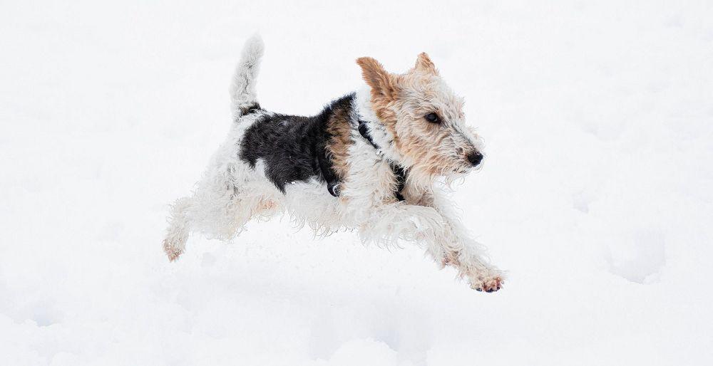 Een ontroerend boek over de verrukkingen van een hondenleven