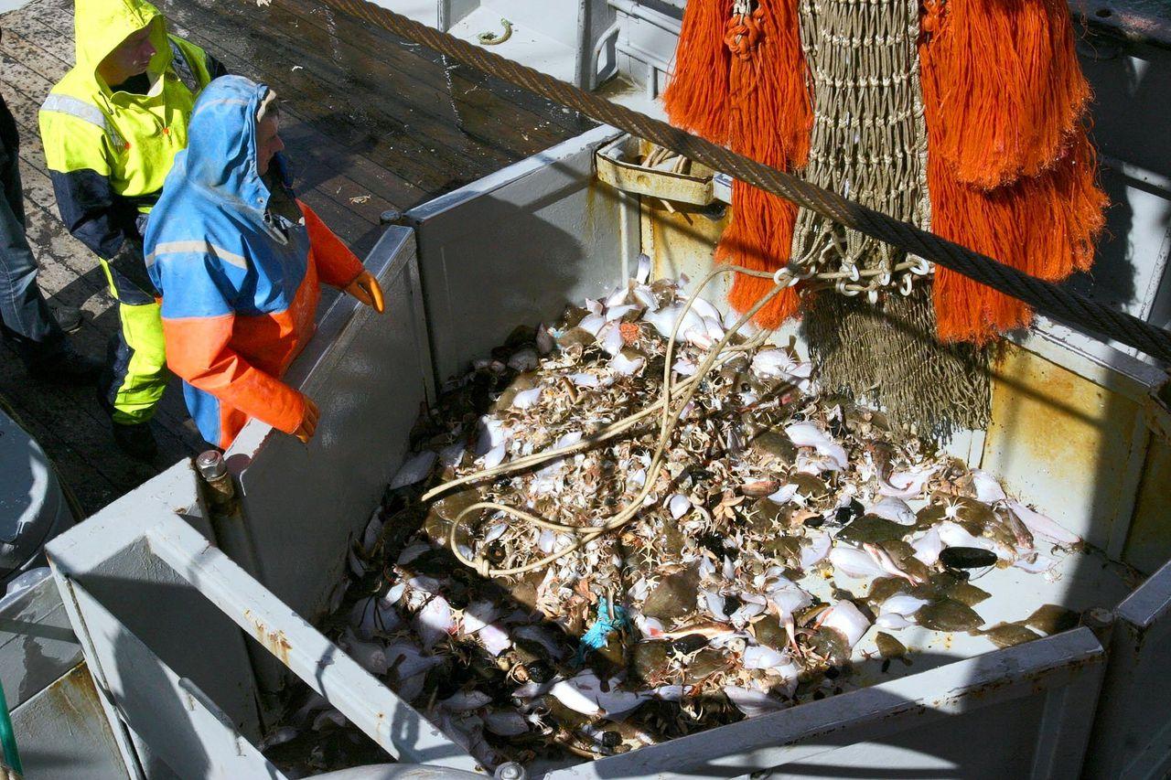 Vangst in de pulsvisserij, waarbij gebruik gemaakt wordt van stroomstootjes via elektrodes in het visnet.