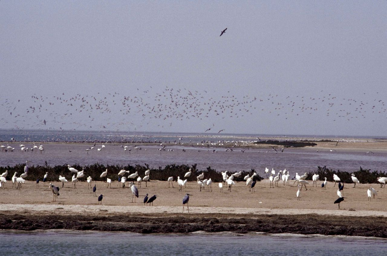 Banc d'Arguin in Mauritanië. Foto Hollandse Hoogte The Arguin Bank shelters one of the most important populations of migrating birds in the world during the winter season.