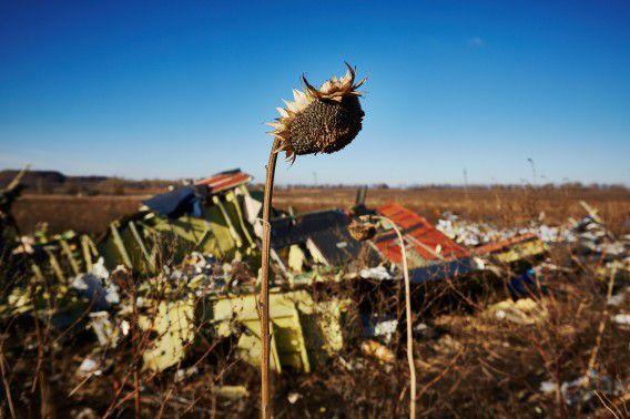 Uitgedroogde zonnebloemen in het rampgebied van de gecrashte vlucht MH17 van Malaysia Airlines.