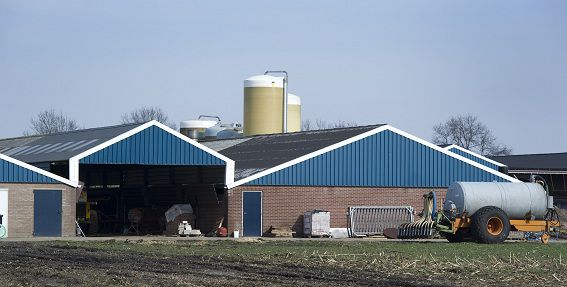 Milieuvergunningen voor veebedrijven zijn al jaren gebaseerd op onbetrouwbare berekeningen voor stankoverlast, meldt Trouw.