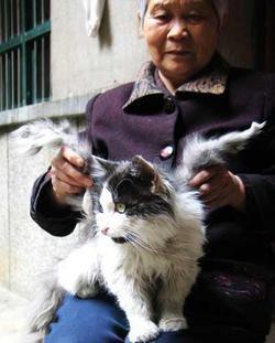 Opoe Feng met haar kat Kat met vleugels Poes met vleugels