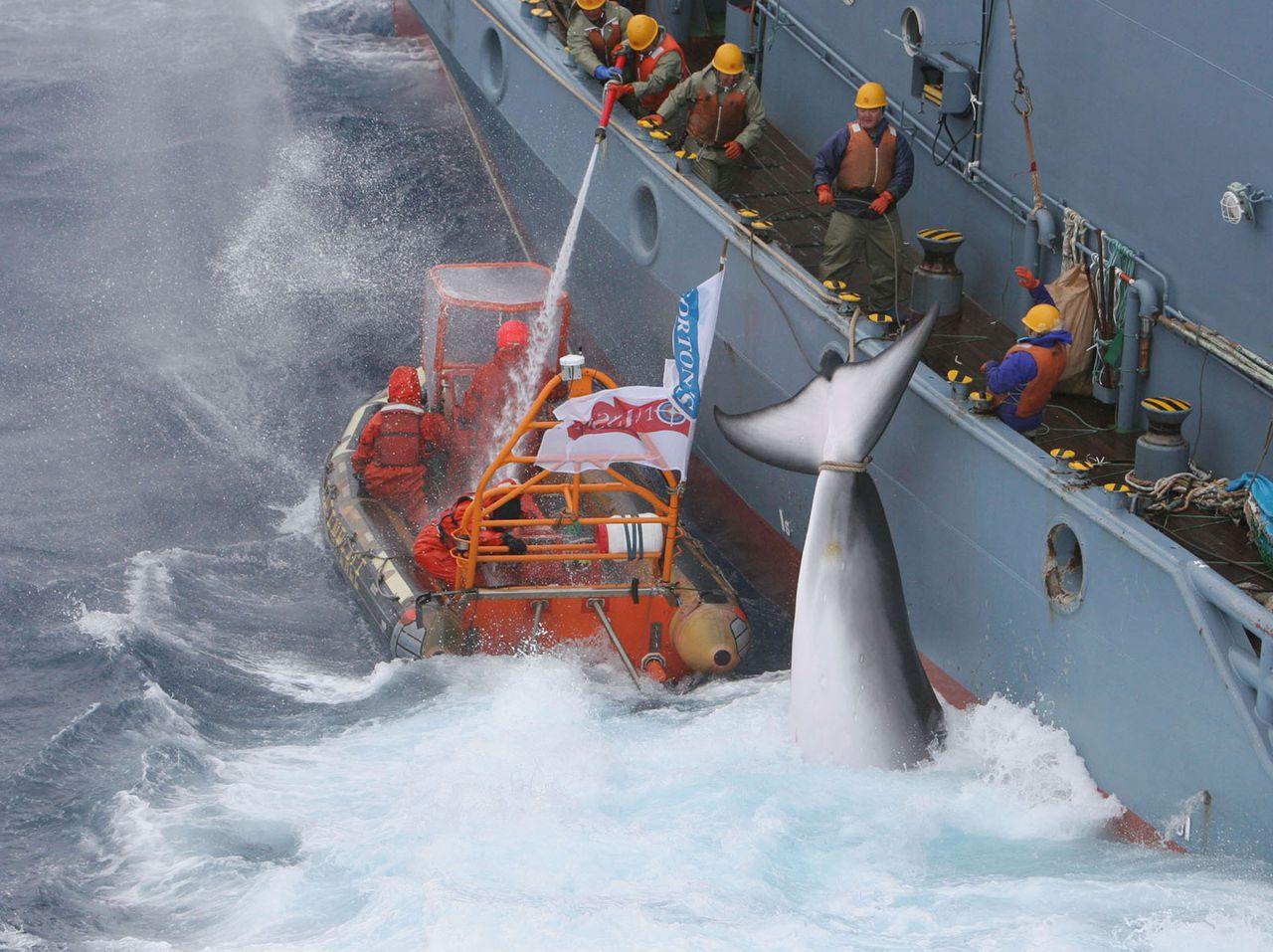 In this photo released by Greenpeace, one of the inflatables from the Greenpeace ship MY Esperanza and MY Arctic Sunrise tries to hinder the transfer of minke whales by a catcher ship of the Japanese whaling fleet to the Nisshin Maru factory ship, in Antarctic seas in the Southern Ocean, Friday Jan. 6 2006. Greenpeace reported at least 20 minke whales had been slaughtered in the past 48 hours but the environmental activist group claimed some success, maintaining its tactics of harassment had allowed other whales to escape the harpoons. (AP Photo / Greenpeace / Kate Davison, HO) ** NO SALES NO ARCHIVE **