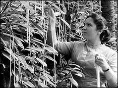 Spaghetti-oogst op 1 april 1957 1 april grap