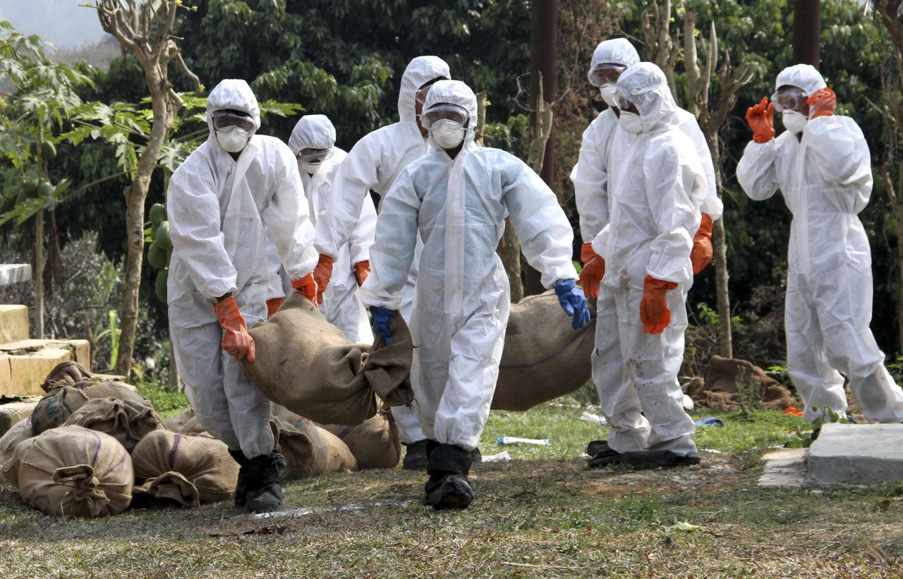Health Department officials wearing protective gear bring culled birds in sacks from a poultry farm after bird flu virus was detected, in Lembucherra area near Agartala, India, Friday, Jan. 27, 2012. More than 2,000 birds were culled in Agartala in the north eastern Indian state of Tripura after reports of deaths of poultry birds in the area, blood samples were collected and examined and H5 strain of avian influenza virus was found, according to the local agency Press trust of India. (AP Photo/Sushanta Das)