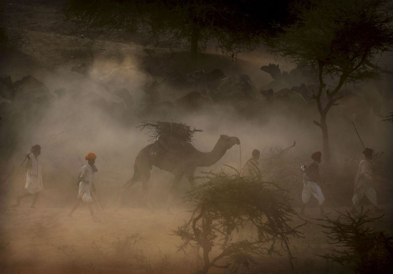 Indian camel herders walk with their herd as they arrive to sell their camels at the annual Pushkar Fair in Pushkar, Rajasthan, India, Wednesday, Nov. 21, 2012. The annual camel and livestock fair attracts thousands of livestock dealers who bring thousands of camels, horses, and cattle. (AP Photo/Kevin Frayer)