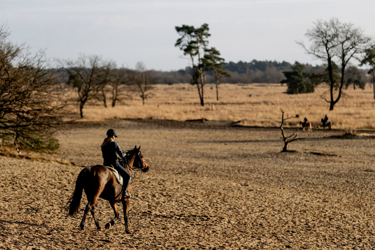 Een recreant te paard in nationaal park de Drunense Duinen.