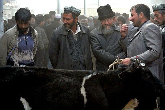 Oeigoerse mannen verkopen kalven op een markt in Hotan, in de regio Xinjiang.