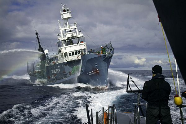 In this photo released by Sea Shepherd Conservation Society, the Japanese whaling ship Yushin Maru No. 3 approaches the Sea Shepherd's high-speed trimaran Gojira during their encounter Friday, Feb. 4, 2011 in Southern Ocean, Antarctica. The anti-whaling activists was chasing the fleet in the hopes of interrupting Japan's annual whale hunt. (AP Photo/Sea Shepherd, Simon Ager) MANDATORY CREDIT, EDITORIAL USE ONLY