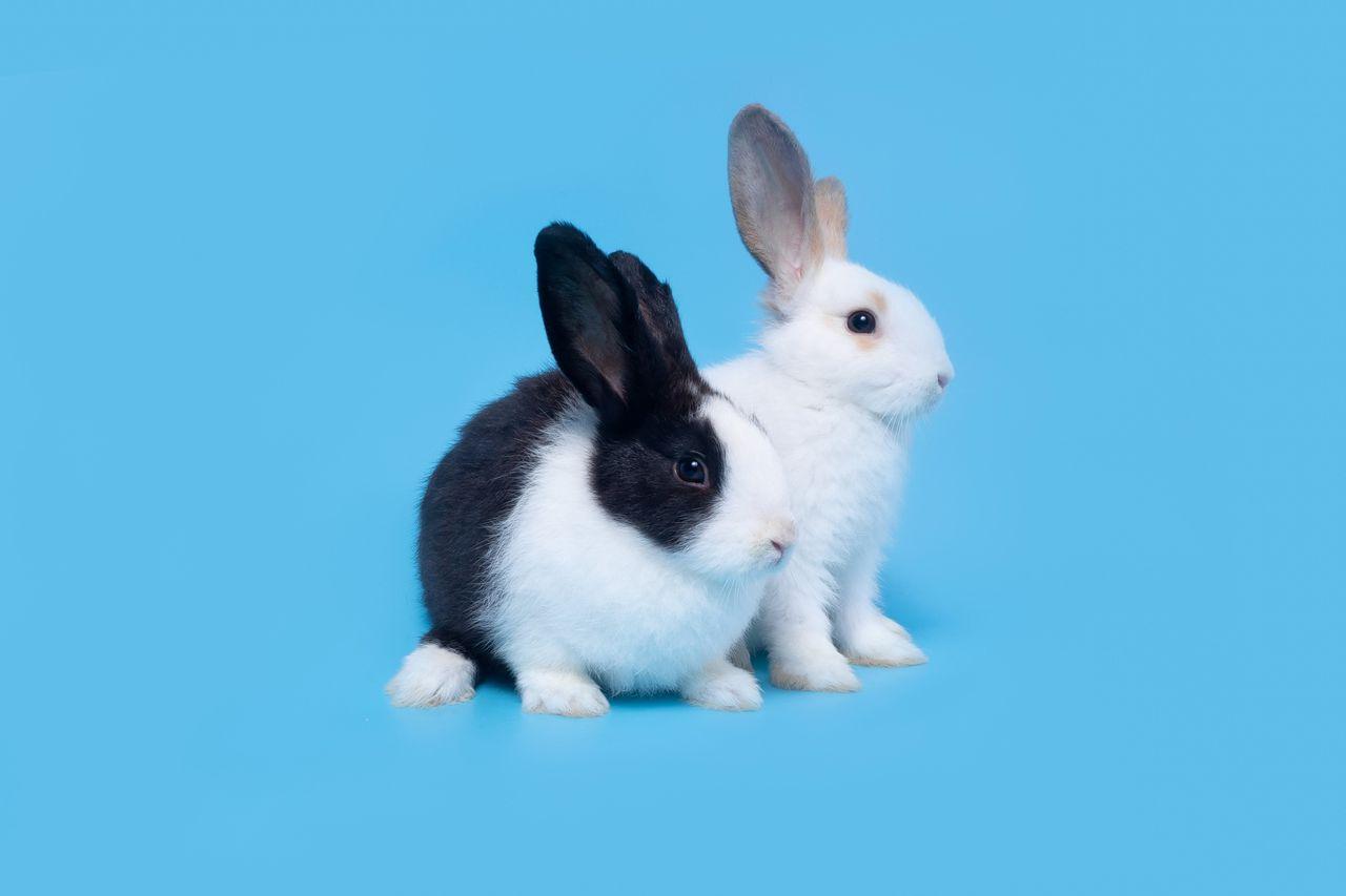 In de natuur graven konijnen gangen om zich te beschermen tegen roofdieren.