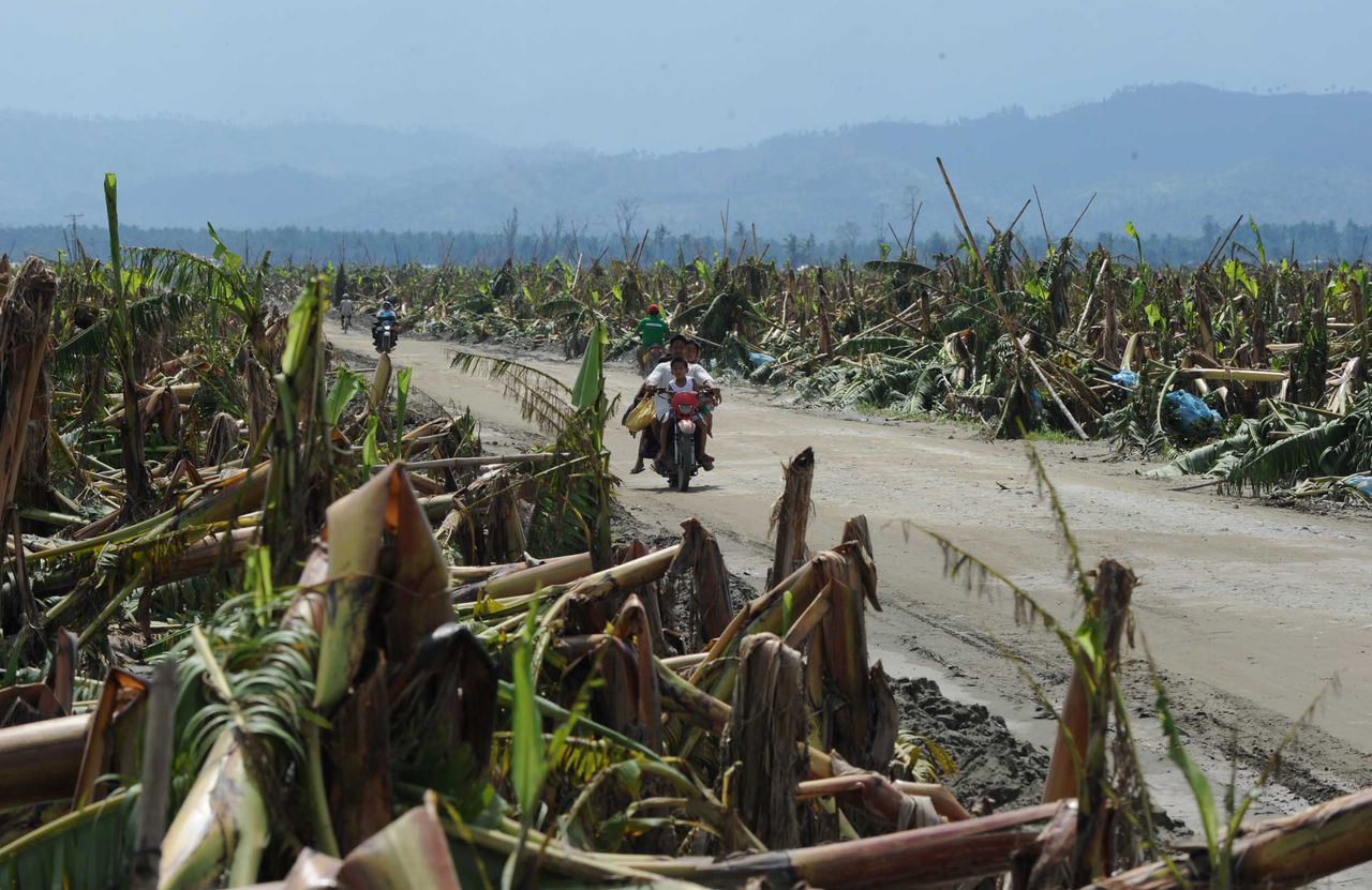 To go with AFP story Philippines-weather-typhoon-farm,FOCUS by Jason Gutierrez In a picture taken on December 8, 2012, motorists ride past flattened banana trees at a plantation in New Bataan town, Compostela Valley province, in the aftermath Typhoon Bopha. Last week's terrifying storm has left more than 1,600 people dead or missing in the southern Philippines, and all but wiped out the banana plantations that are one of the desperately poor country's few export earners. AFP PHOTO / TED ALJIBE