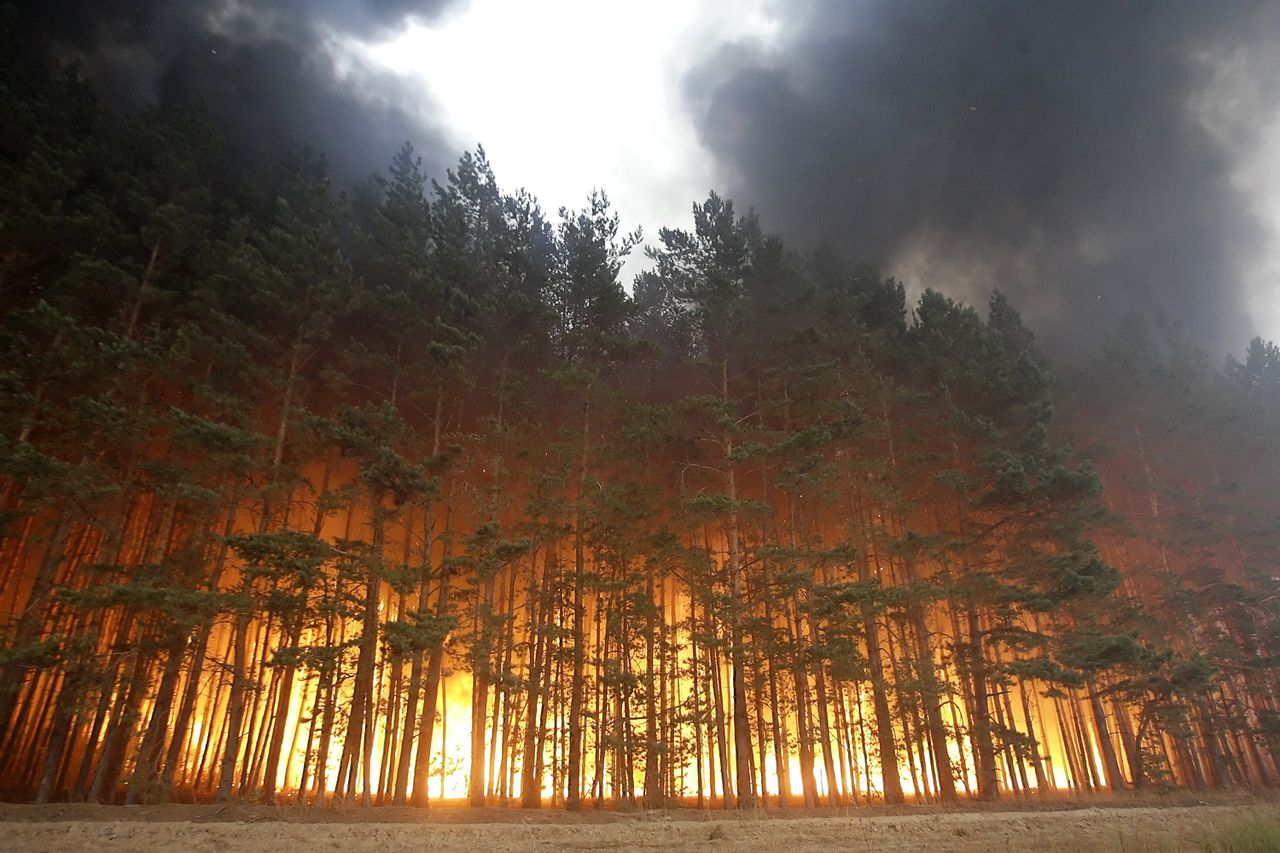 A forest in fire is seen near village Dolginino on August 4, 2010. Russia's worst heatwave for decades shows no sign of relenting, officials warned as firefighters battled hundreds of wildfires in a national disaster that has claimed at least 40 lives. President Dmitry Medvedev has declared a state of emergency in seven Russian regions over the fires which have left tens of thousands of hectares of land ablaze and uprooted hundreds from their homes. AFP PHOTO / ARTYOM KOROTAYEV