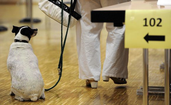 Caption: A woman is accompanied by her dog as she cast her vote at a polling station in Blieskastel, southwestern Germany, during regional elections in the federal state of Saarland on March 25, 2012. German voters went to the polls in the first of three quick-fire state ballots which could give Chancellor Angela Merkel's coalition ally a drubbing ahead of a 2013 national election. After a gruelling seven regional votes in the year 2011, Merkel and her junior Free Democrats were only due to fight one in 2012, but that unexpectedly swelled to three after the sudden collapse of two state governments. The electoral season kicked off in Saarland, a small region of about 800,000 voters bordering France and Luxembourg, where the CDU is polling neck-and-neck with the main opposition Social Democratic Party (SPD). AFP PHOTO / ARNE DEDERT GERMANY OUT