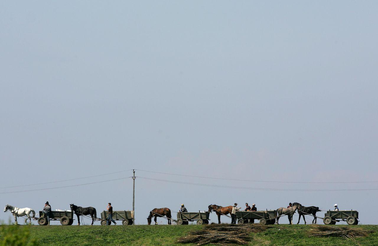 Dijkverzwaring in Roemenië Bistret. Roemeense dorpelingen rijden zandzakken met paard en wagen naar een gebroken dam van de rivier de Donau bij Bistret. De dam bezweek gisteren onder de druk van het stijgende water. De Donau bereikte dit weekeinde door zware regenval en smeltende sneeuw uit Centraal-Europa haar hoogste peil in 111 jaar. Duizenden soldaten en vrijwilligers proberen de wateroverlast te beperken door de oevers van de rivier te versterken. Dit weekeinde moesten ook duizenden mensen in Servië, Roemenië en Bulgarije hun huis verlaten, nadat de rivier door opgeworpen nooddammen brak. Alleen al in het zuiden van Roemenië, dat vorig jaar ook al werd getroffen door zware overstromingen, verlieten dit weekeinde ruim drieduizend mensen hun huizen en werden meer dan zesduizend dieren geëvacueerd, nadat een dam doorbrak. De Roemeense autoriteiten hebben grote stukken landbouwgrond onder laten lopen om het overtollige water op te vangen. Bij de noordwestelijke havenstad Vidin is uit voorzorg een tentenkamp opgezet voor 1.200 mensen. Ten oosten van de Servische hoofdstad Belgrado overspoelde de Donau een middeleeuwse vesting en een spoorlijn. In de noordelijke provincie Vojvodina, ook wel de graanschuur van Servië genoemd, kwamen grote stukken landbouwgrond onder water te staan. In Bulgarije liepen vier havensteden aan de Donau gedeeltelijk onder, evenals duizenden hectare akkerland. Roemenië hoopt dat het water vandaag of morgen zijn hoogste peil bereikt. (AP, Reuters, BBC) Foto Reuters, Bogdan Cristel Romanian villagers use their horse-driven carts to carry sandbags to reinforce a dam broken by the Danube river in Bistret, 280 km (174 miles) southwest of Bucharest April 18, 2006. Ten thousand Romanians faced evacuation on Tuesday as rescue workers raced to fix a broken dam on the Danube before the swelling river could flood their low-lying villages. The Danube continued to rise in southeast Europe after reaching its highest level in more than a century over the w