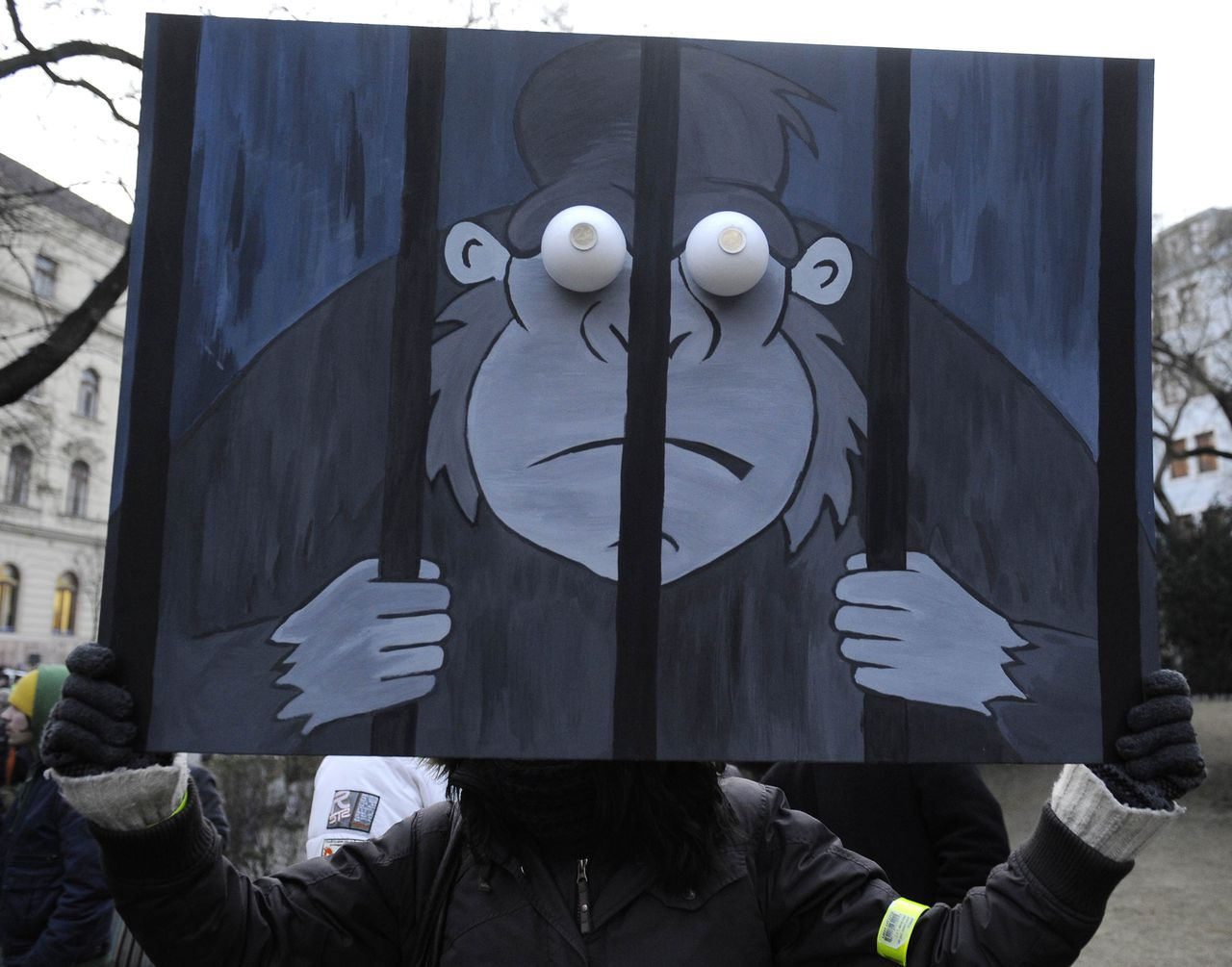 A protester holds up a picture depicting a gorilla in jail during a protest rally at SNP Square in Bratislava February 3, 2012. Slovaks attend protests in capital Bratislava and other Slovak towns, outraged by a corruption scandal - codename 'Gorilla' - involving top politicians, government officials and private equity group Penta. REUTERS/Radovan Stoklasa (SLOVAKIA - Tags: ANIMALS CIVIL UNREST POLITICS)