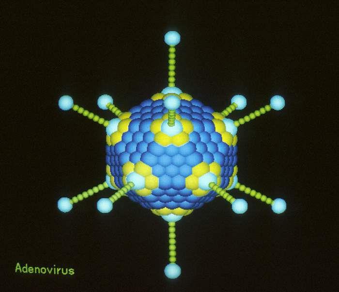 Adenovirus. Graphic Salk Institute
