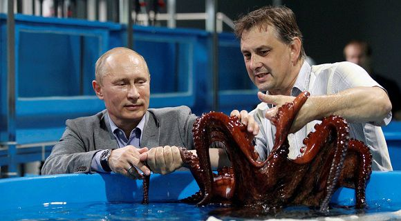 Caption: Russian President Vladimir Putin (L) touches an octopus as he visits an oceanarium on the Russky Island in Vladivostok, September 6, 2012. Putin will take part in the Asia-Pacific Economic Cooperation (APEC) summit. REUTERS/Ria NovostiMikhail Klimentyev/Pool (RUSSIA - Tags: POLITICS ANIMALS) THIS IMAGE HAS BEEN SUPPLIED BY A THIRD PARTY. IT IS DISTRIBUTED, EXACTLY AS RECEIVED BY REUTERS, AS A SERVICE TO CLIENTS