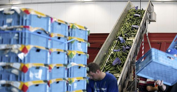 Caption: A picture taken on June 3, 2011 shows cucumbers that will be destroyed at the Mechelse Veilingen - fruit and vegetable auctions, in Sint-Katelijne-Waver, near Mechelen, on June 3, 2011. Some 112,000 cases of vegetables, mostly tomatoes and cucumbers had to be destroyed after prices dropped dramatically at the auctions this morning. Vegetable prizes are suffering from the consequences of the EHEC-bacteria and the Russian import ban on European fresh products. Europe's farm ministers are likely to be summoned for emergency talks in Luxembourg on June 17 to discuss the fallout for fruit and vegetable farmers from an outbreak of E. coli poisoning in Germany. AFP PHOTO / BELGA - NICOLAS MAETERLINCK