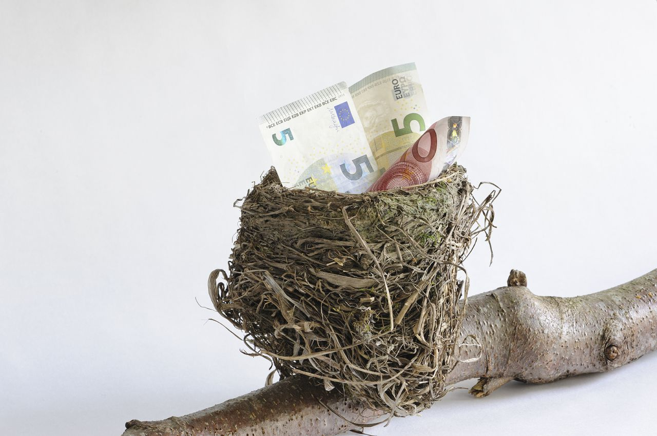 Birds nest with low denomination currency suggesting the start of a nest egg. Saving for something special such as retirement. The nest rests on a branch