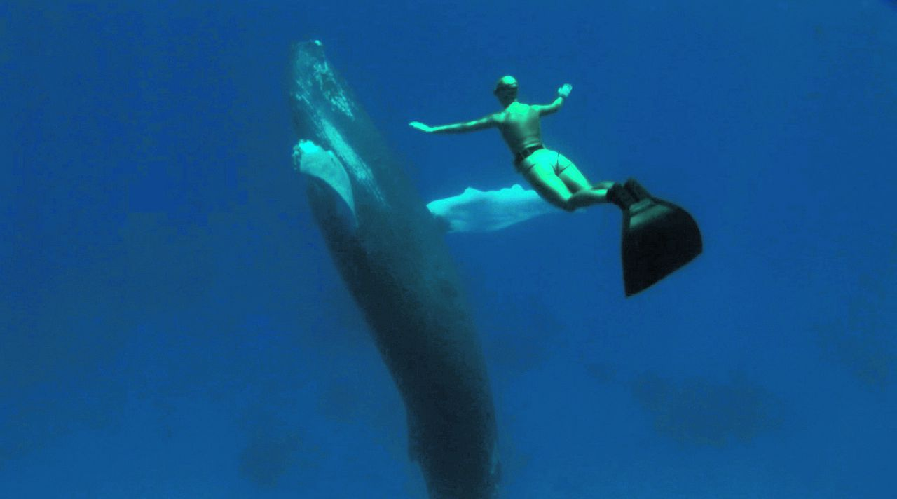 scene uit de documentaire The Cove (2009) FOTO: Benelux Film Eight time world-champion freediver Mandy Rae Cruickshank dives with a humpback whale that befreinded her during the filming of the documentary, The Cove.