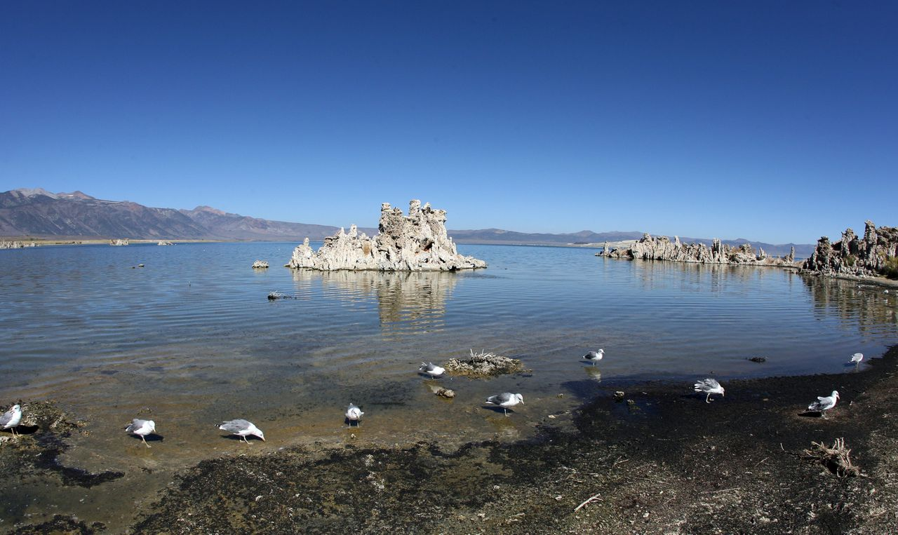 Het zoute Monomeer in het oosten van Californië. Foto AFP The Mono Lake is pictured 12 September 2007 in Lee Vining, California. In order to provide water for growing Los Angeles, water was diverted from the Owens River and then from the tributaries that fed Mono Lake. In 1941 the city of Los Angeles extended an aqueduct system into the Mono Basin, diverting water that would otherwise have entered Mono Lake. The water surface area was 54,924 acres (222 km²) in 1941. Water diversion soon rapidly reduced the surface area to 37,688 acres (153 km²) by 1982, resulting in a loss of nearly 27 square miles (70 km²) of lake area. Mono Lake was spared the same fate 28 September 1994, when the California State Water Resources Control Board issued an order to protect Mono Lake and its tributary streams. Since that time the lake level has steadily risen. AFP PHOTO/GABRIEL BOUYS