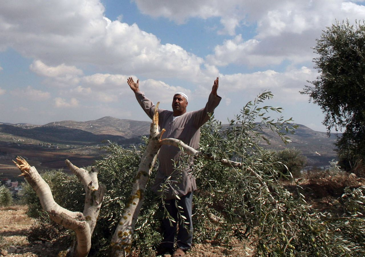 Een Palestijnse boer bij een vernielde olijfboom in zijn boomgaard bij de Israëlische nederzetting Yitzhar bij de Palestijnse stad Nablus. Foto AFP A Palestinian farmer from the village of Burin reacts after finding his olive trees felled in the northern West Bank close to the Israeli settlement of Yitzhar near the city of Nablus on October 11, 2008. Two Palestinian farmers were lightly wounded today when they were attacked by people they said were Jewish settlers from Yitzhar who tore down around 15 olives trees while the Palestinians were collecting the harvest. AFP PHOTO/JAAFAR ASHTIYEH