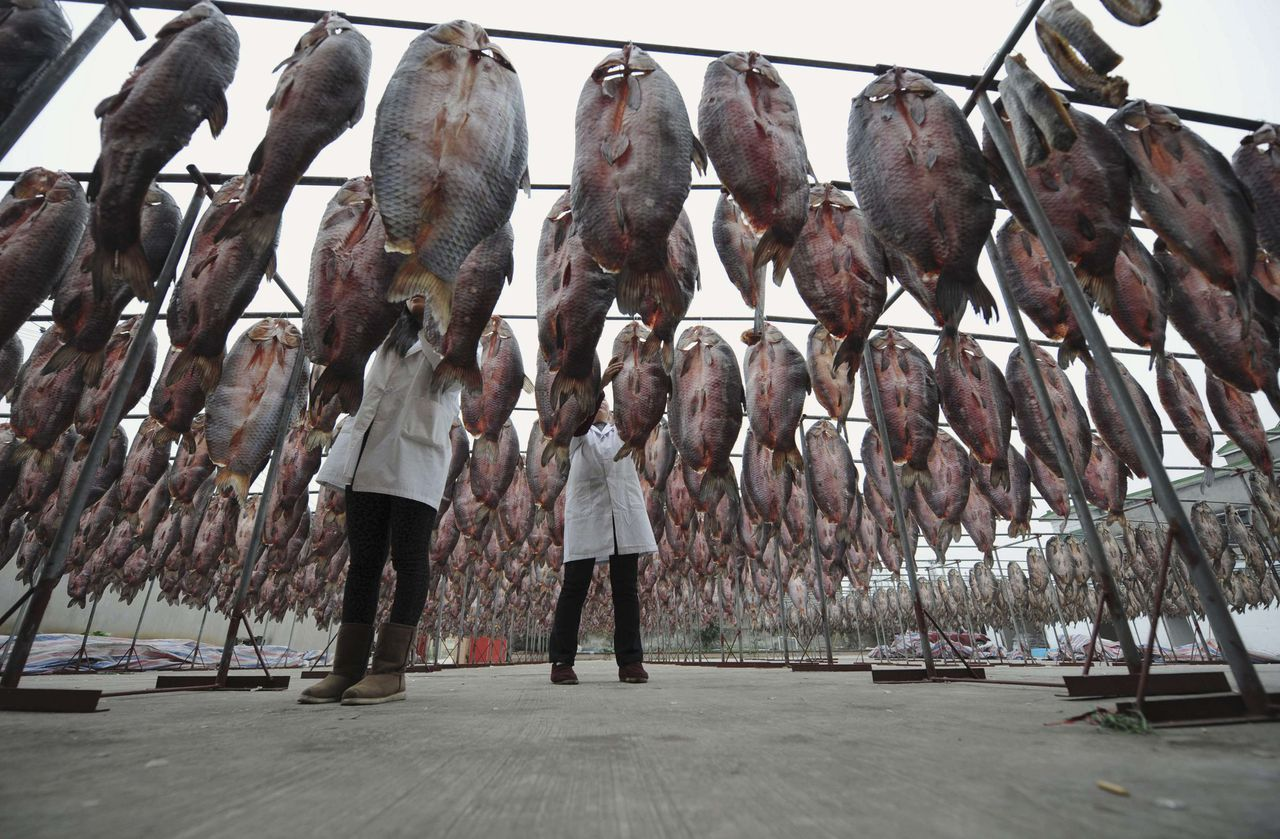 Workers hang dried fish onto poles at a processing facility on the outskirts of Hangzhou, Zhejiang province December 15, 2011. Dried fish is a traditional dish during the Chinese Spring Festival in Zhejiang province. REUTERS/Lang Lang (CHINA - Tags: SOCIETY FOOD BUSINESS)