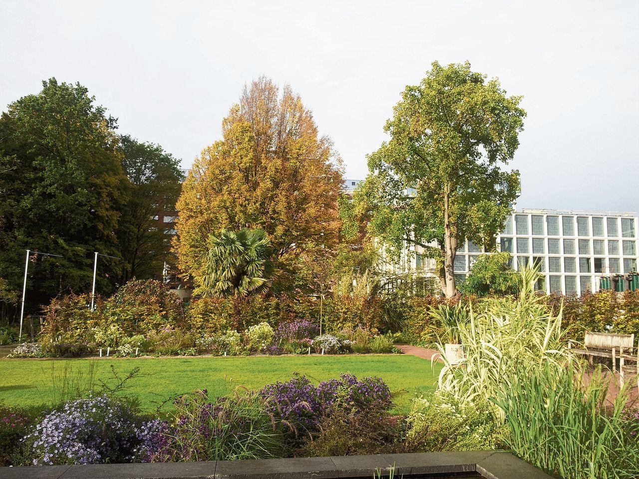 De Botanische tuin Zuidas: bij veel Amsterdammers nog onbekend.