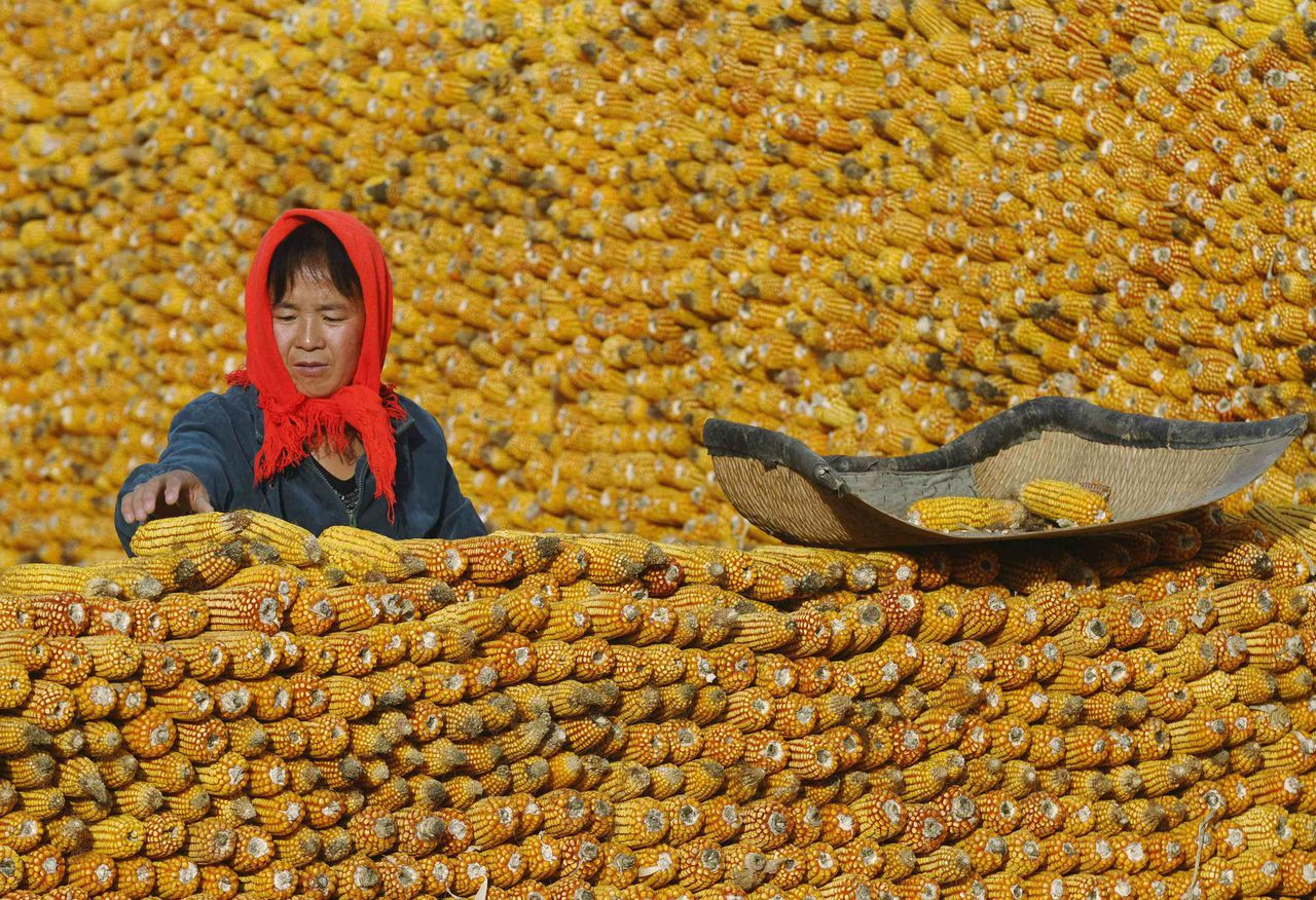 A farmer piles up corn in front of her house in Changzhi, Shanxi province in this October 21, 2009 file photo. Beijing and the influential U.S. agriculture department may have overstated China's corn crop by as much as 14 percent, pointing to higher imports from the world's second-largest consumer of the grain that could squeeze already tightening global supplies. Picture taken October 21, 2009. To match Analysis CHINA-CORN/ REUTERS/Stringer/Files (CHINA - Tags: BUSINESS AGRICULTURE POLITICS COMMODITIES) CHINA OUT. NO COMMERCIAL OR EDITORIAL SALES IN CHINA