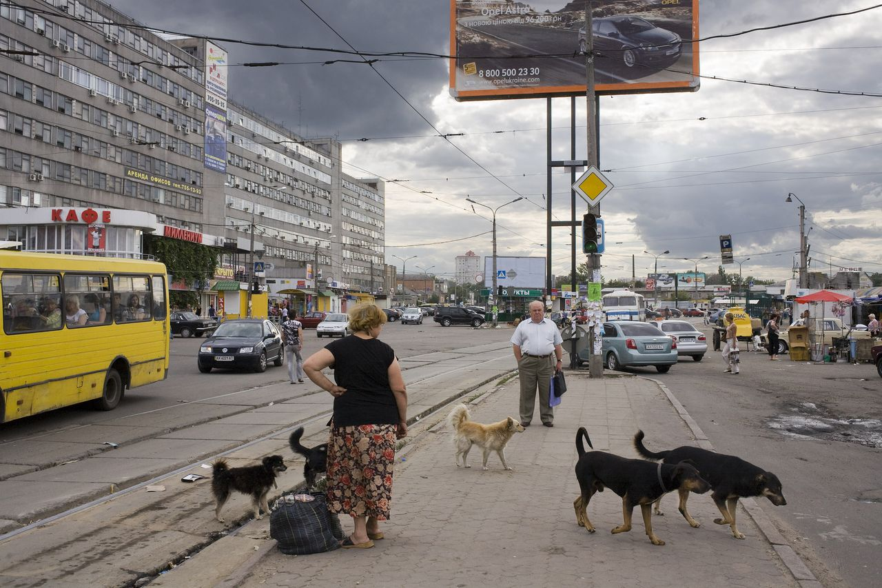 Ukraine, Kharkiv, Kharkov, August 2008. Stray dogs pass people who are waiting for the tram. Eastern Europe, Europe East, city, cities, urban, animal, animals, dogs, dog, stray, street, poverty, road, traffic, car, cars, stray dog, public transport, people, billboard, advertising, commercial, Oekraine, Charkiv, Charkov, Straathonden passeren mensen die op de tram wachten. Oost Europa, Oost-Europa, hond, honden, dier, dieren, stad, steden, economie, transport, auto, auto's, straathond, armoede, verkeer, Openbaar vervoer, billboard, reclame, Ukraine, Charkiw, Charkow, Ost Europa, Ost-Europa, Frau, Hund, Hunde, Stadtansicht, PKW, Verkehr, Armut, Strassenkoeter, Strassenbahn, billboard, Reklam, Photo: Martin Roemers