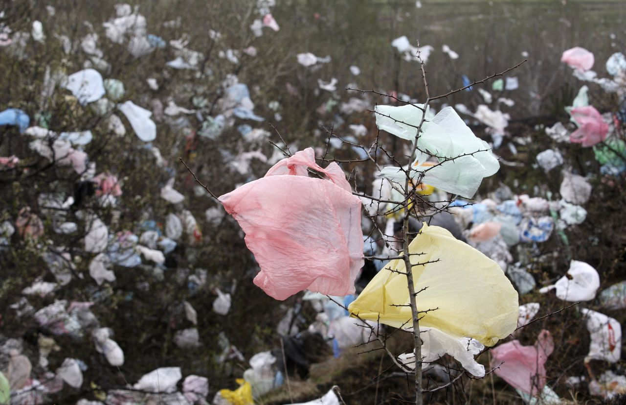 Bushes are covered with used plastic bags in the open field near village of Suhodol, in the suburbs of capital Sofia, March 30, 2008. Up to 190 nations will start work on a new U.N. climate treaty in Bangkok on Monday, in a test of how far the world has progressed after years of deadlock highlighted by a U.S. outburst about a duck in 2005. REUTERS/Oleg Popov (BULGARIA)