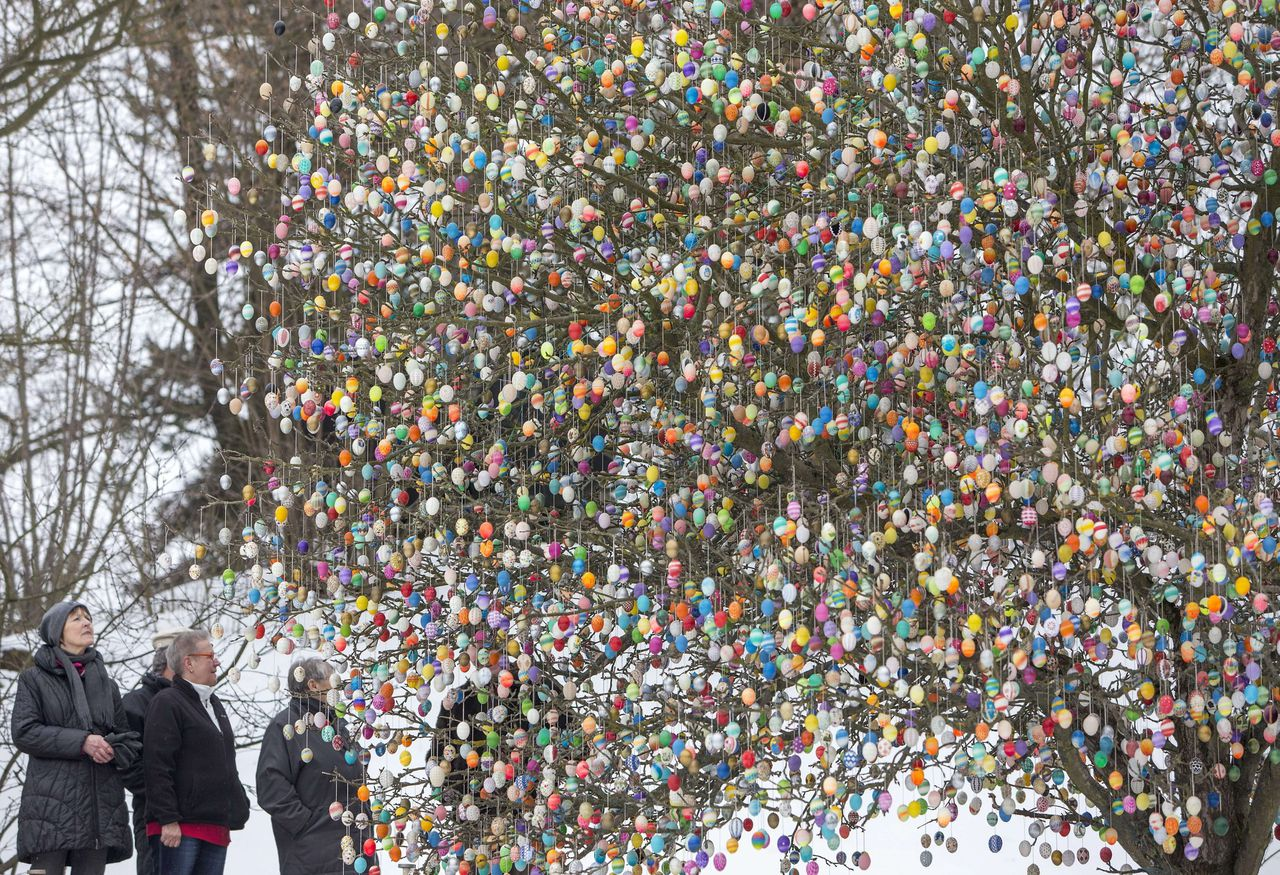 People look at the decorated apple tree of Volker Kraft on March 18, 2013 in Saalfeld, Germany. Kraft decorates his tree with easter eggs every year. AFP PHOTO / MICHAEL REICHEL GERMANY OUT