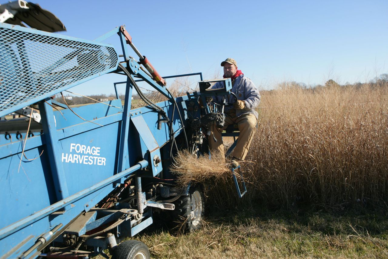 In a December 2006 photo provided by the Oak Ridge National Laboratory, Derick Hopkins is shown cutting switchgrass, a potential biofuel, at the University of Tennessee's Agricultural Institute in Knoxville, Tenn. The federal lab is partnering with UT and several other universities and companies in a bid to host a $125 million bio-energy center. (AP Photo/Oak Ridge National Lab, Charles Brooks) ** NO SALES **