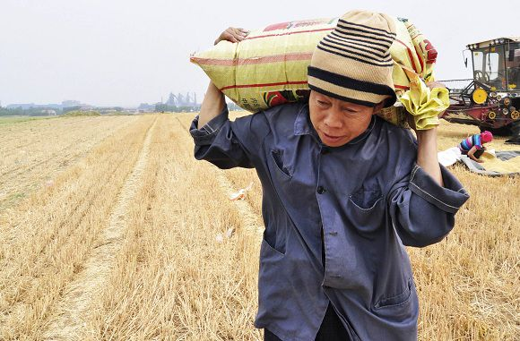 A farmer carries a sack of wheat in Zouping county, Shandong province May 30, 2011. China, the world's top wheat producer, is likely to reap a bumper wheat harvest in 2011 despite drought earlier this year in most of its wheat-growing areas in the north, the agriculture ministry said. Picture taken May 30, 2011. REUTERS/China Daily (CHINA - Tags: AGRICULTURE BUSINESS) CHINA OUT. NO COMMERCIAL OR EDITORIAL SALES IN CHINA