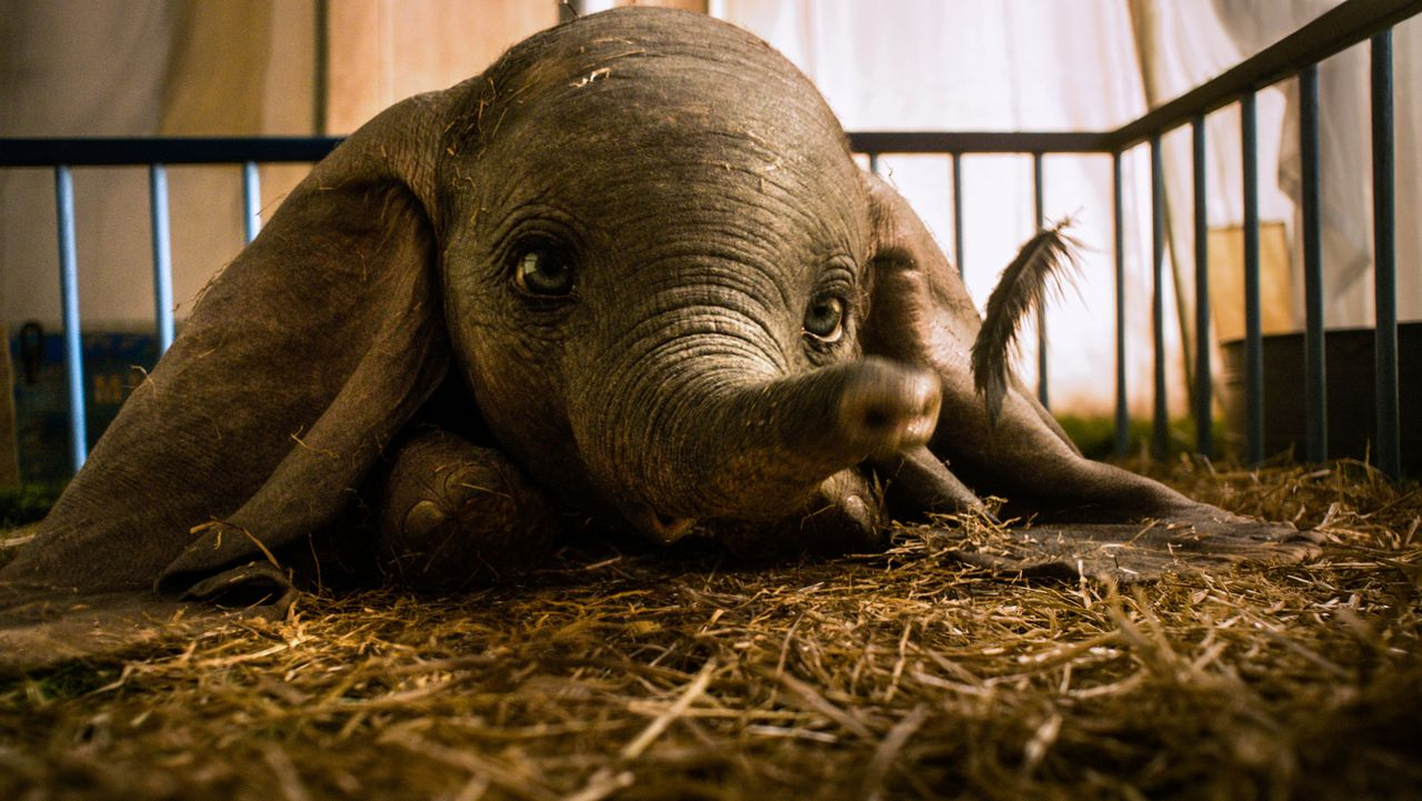 Dumbo in de live action-remake die deze week uitkomt.