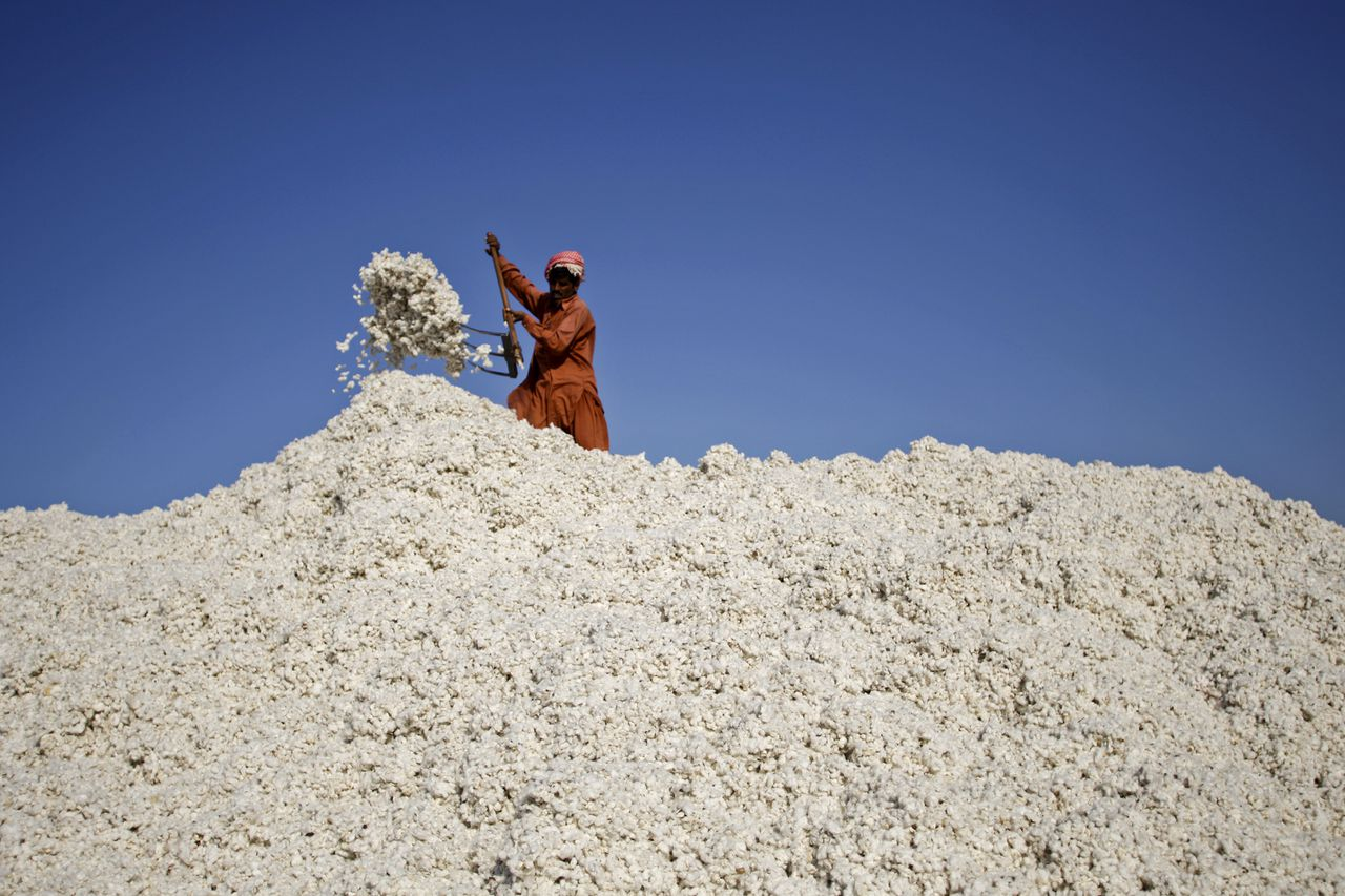 A worker shovels cotton at ginning factory in the Lodhran district of Punjab province, Pakistan, on Saturday, Oct. 6, 2012. Pakistan, the fourth-biggest cotton grower, lost 500,000 bales of the commodity after monsoon rains caused flash floods in September, a government official at the textile ministry said. Photographer: Asad Zaidi/Bloomberg