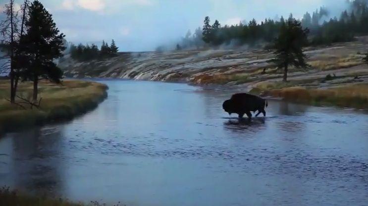Yellowstone Park veranderde rigoureus toen er weer wolven werden losgelaten.