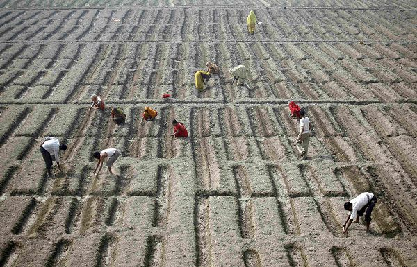 Farmers work in a cucumber field in New Delhi February 4, 2011. Indian Prime Minster Manmohan Singh said on Friday that high headline inflation is beginning to pose a serious threat to India's high growth plans, in one of his strongest warnings over the risk of rising prices. REUTERS/Parivartan Sharma (INDIA - Tags: BUSINESS FOOD)